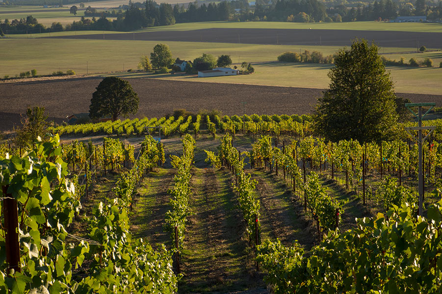 Keeler Estate Vineyard Oregon