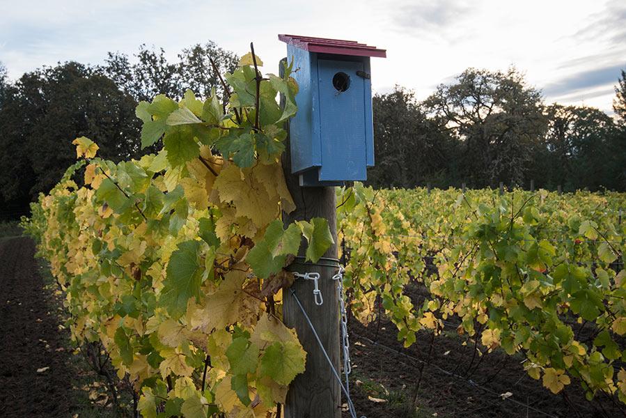 biodynamic vineyard keeler estate