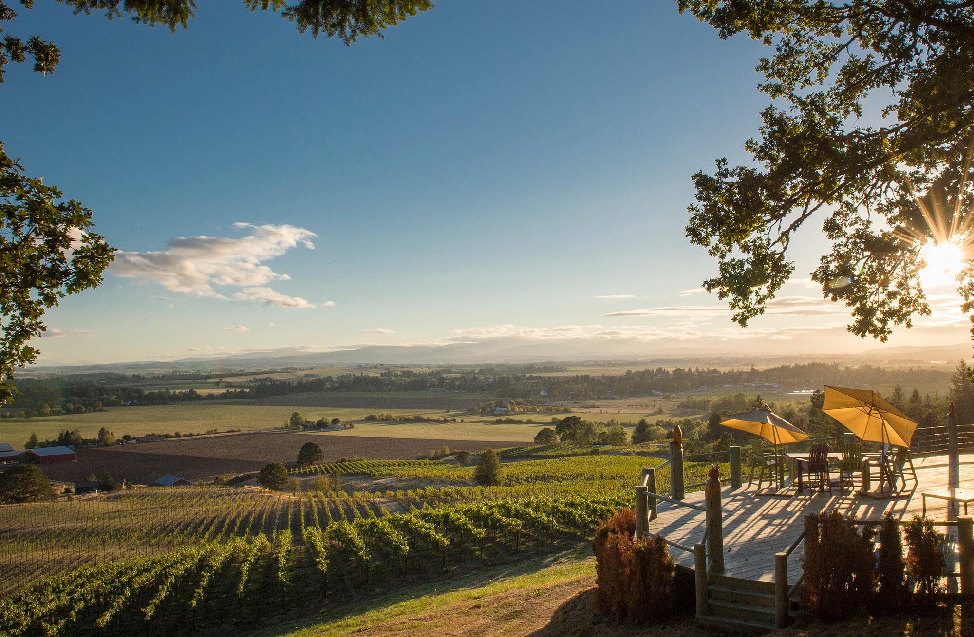 Best View Winery in Oregon | Keeler Estate Vineyard