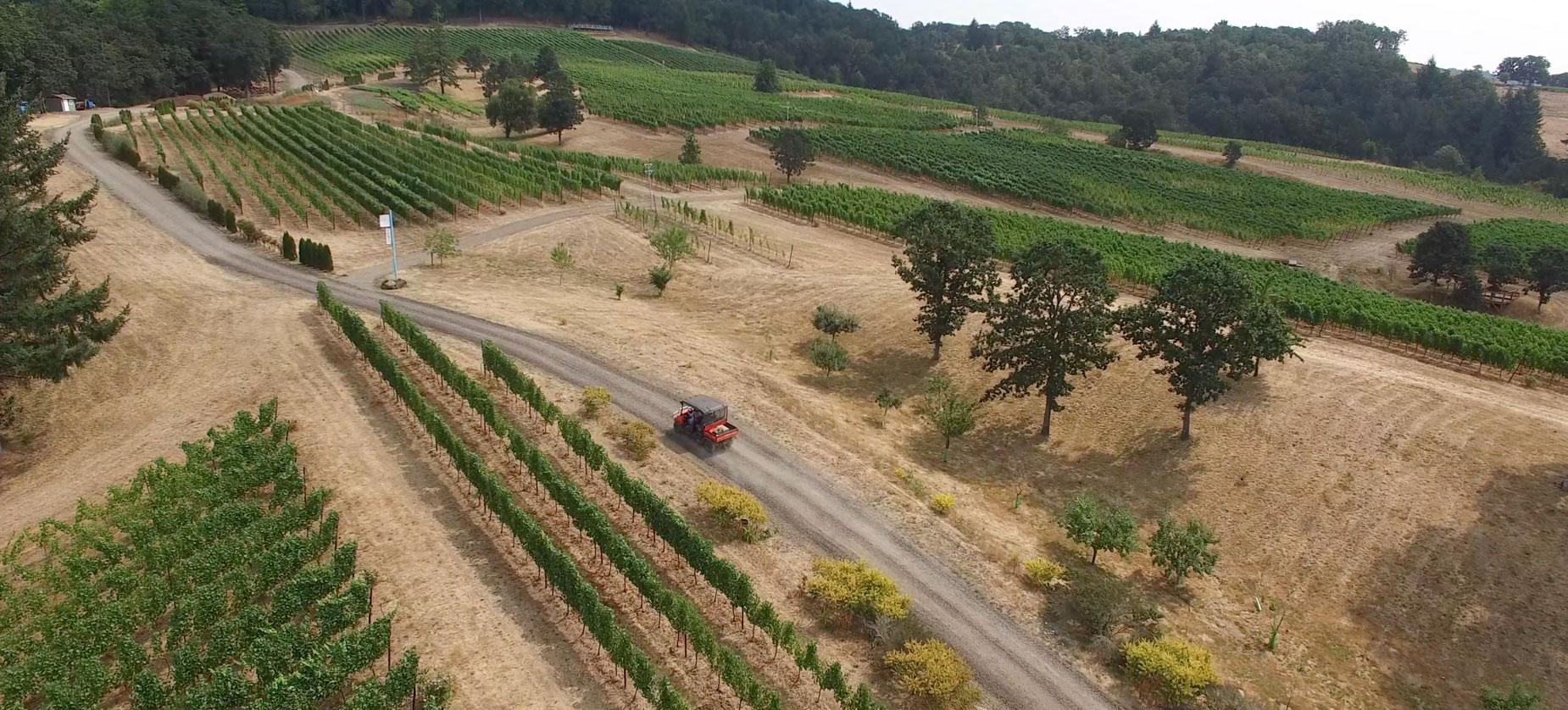 Keeler Estate Vineyard Experiences