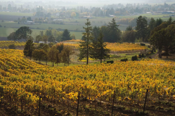 Keeler Estate Vineyard Fall