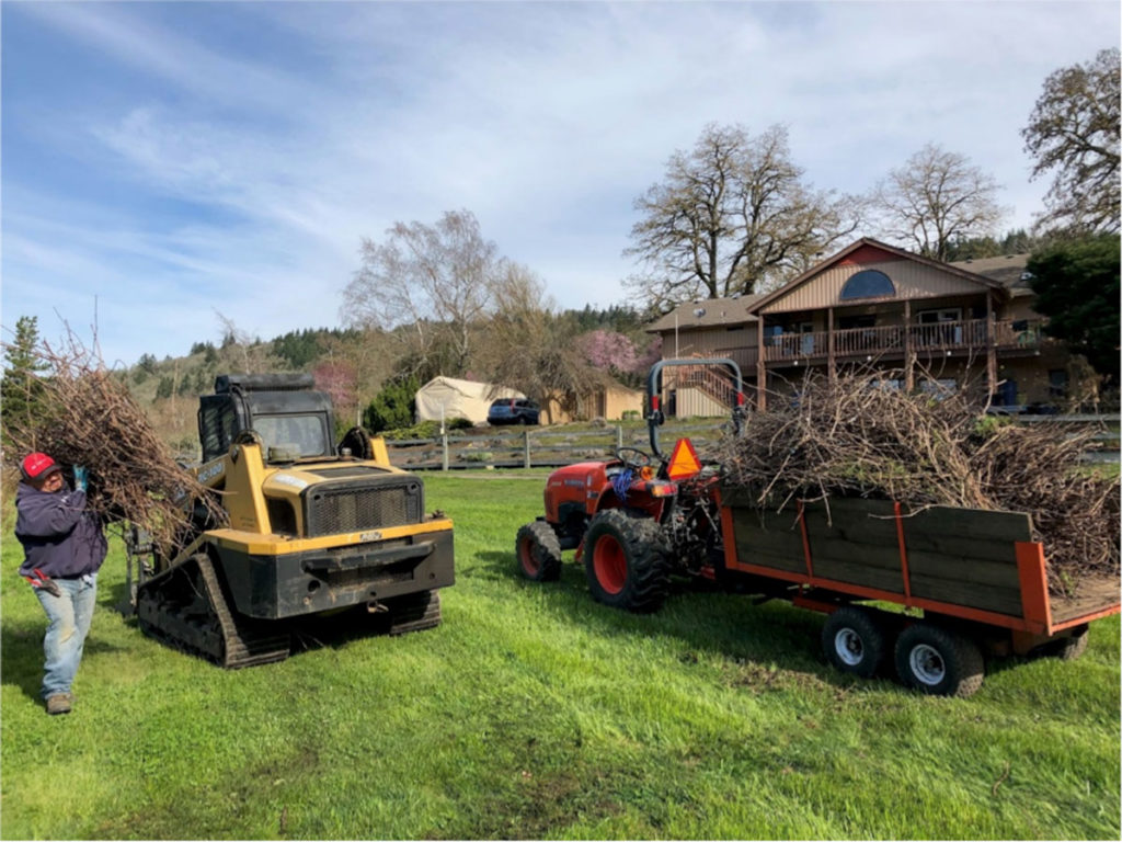 Pruning Vineyard