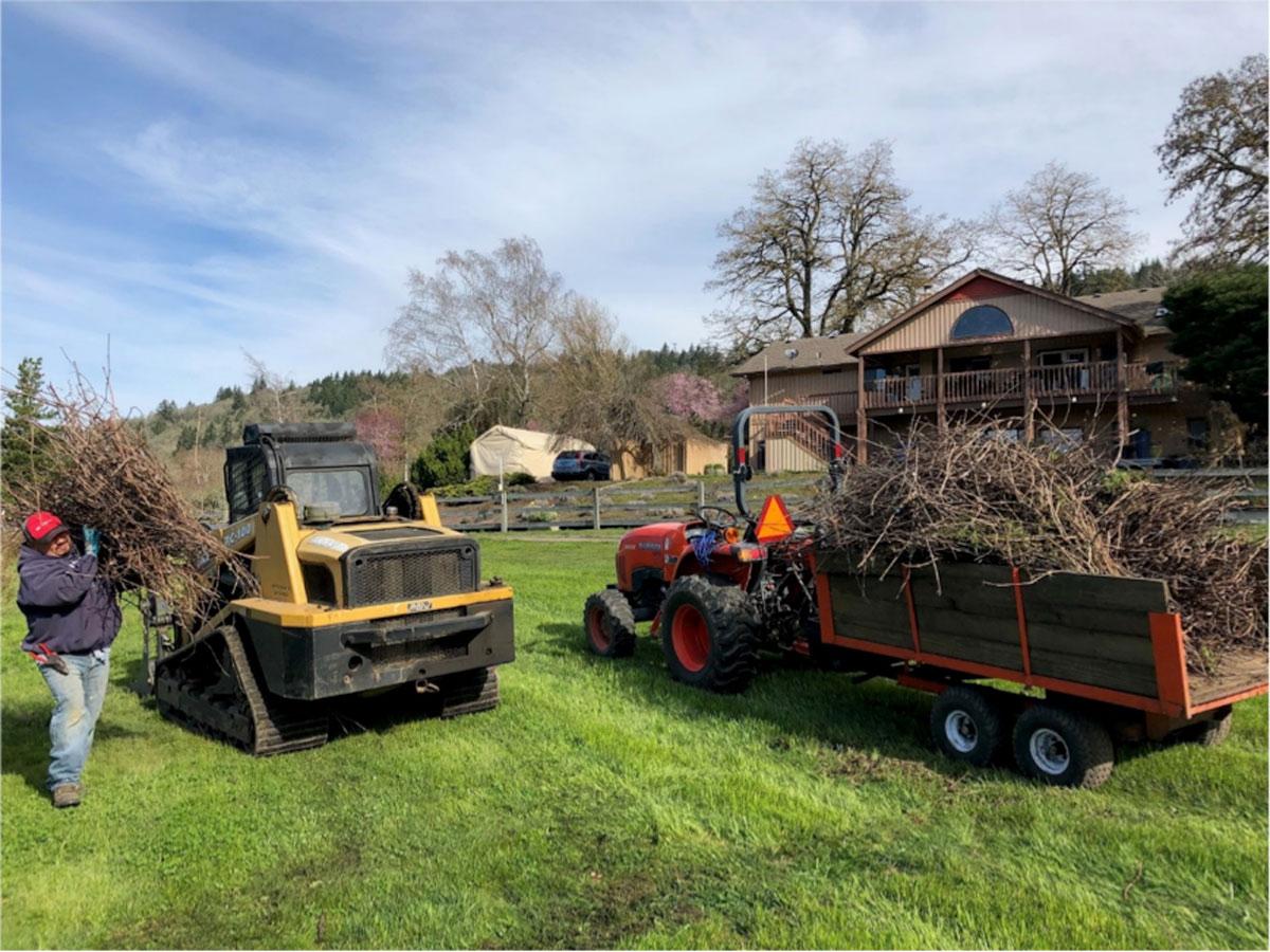 Pruning Vineyard